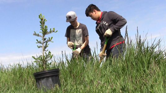 From Brownfields to Greenspace
