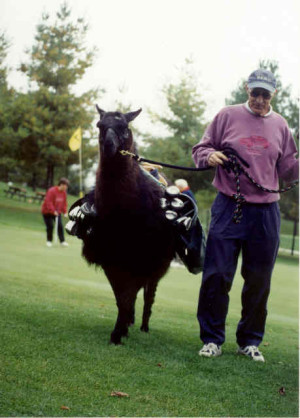 "Golf caddie llama from ""Working Animals"" episode ""The Teammates""."